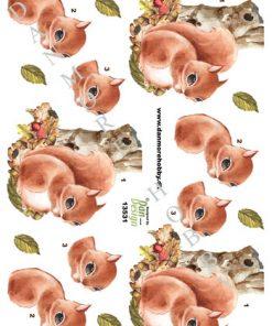 Dyr/3d ark med et lille sødt egern/Dan-Design