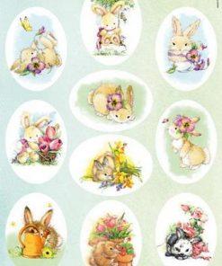 Dyr / Søde kanin billeder / Marianne design