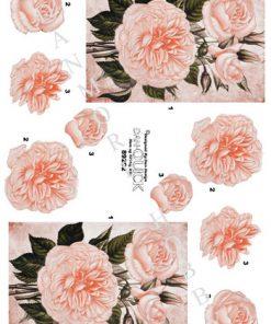 Blomster / Lyserøde roser / Dan-Quick