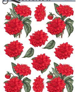 Blomster / Knald røde dahlia / Quickies