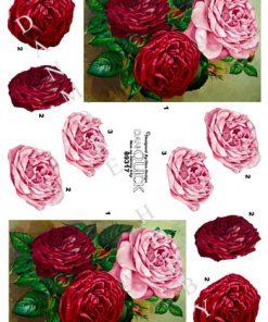 Blomster / Flotte roser / Dan-Quick