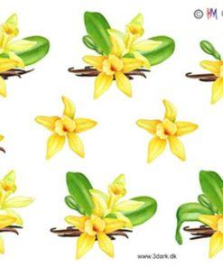 Blomster / Orkide / Hm design