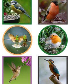 Dyr / Fugle / Barto design