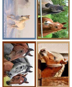Heste billeder / Barto Design