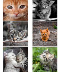 Katte billeder / Barto Design