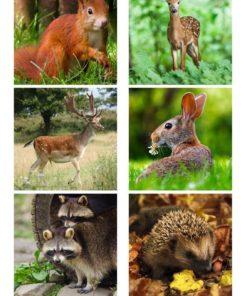 Skovens dyr / Barto Design