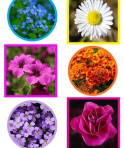 Blomster billeder / Barto design