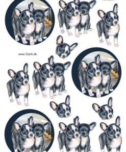 Dyr / Chihuahua / Hm Easy