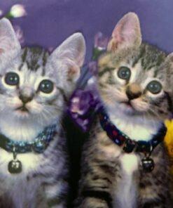 Diamond painting / Kattekillinger