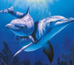 Diamond painting sæt / Delfiner